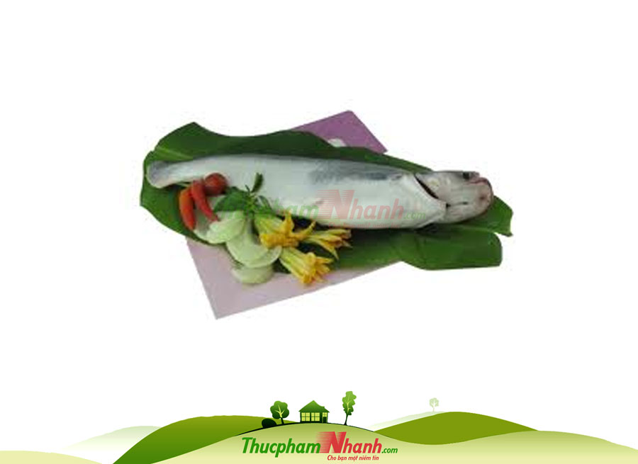 Ca Basa Nguyen Con Lam Sach